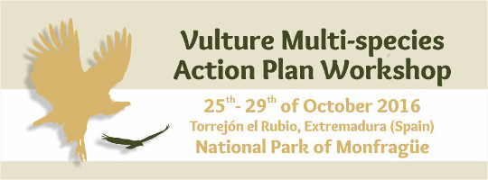 Vultures workshop 2016. Monfragüe