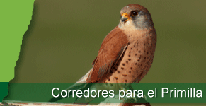 fh_corredores.png