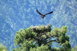 Neus and Oriol chick out of the nest. © Boumort – Alinyà Team