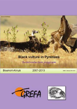Balck vulture in Pyrenees. Annual report 2013