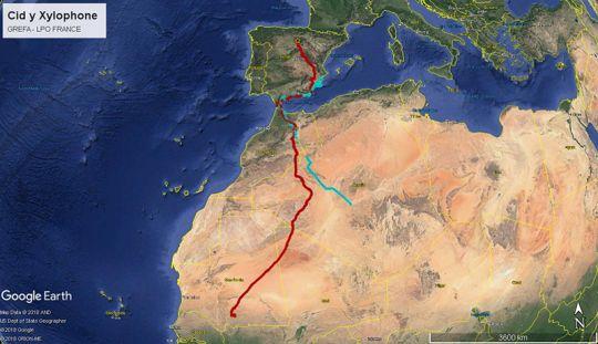 Deseamos la mejor de las suertes a 'Cid' y 'Xylophone', primeros buitres negros con GPS que cruzan a África