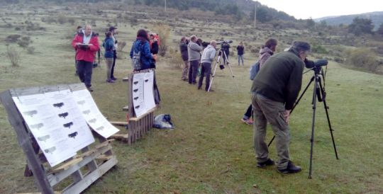 Por tercer año consecutivo GREFA libera a un grupo de buitres negros en la Sierra de la Demanda burgalesa