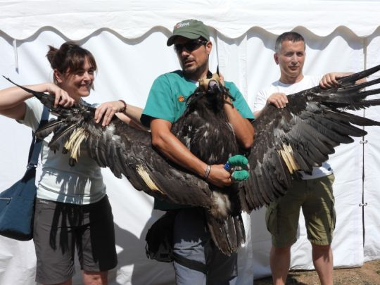 Lucky sponsors photographed with their adopted cinereous vulture, destined for its reintroduction in the Sierra de la Demanda, Northern Spain.